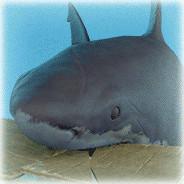 Jan Jonas